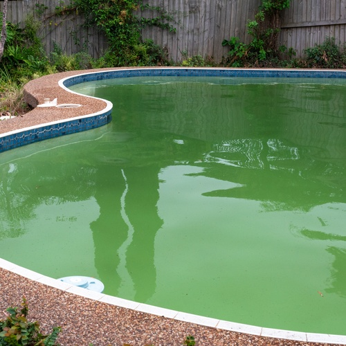 Green Pool Cleanup