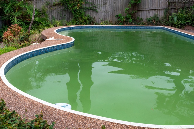 Green Pool Clean-Up